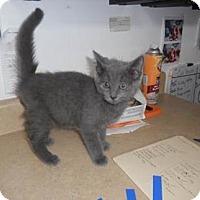 Adopt A Pet :: Henry - Belleville, MI