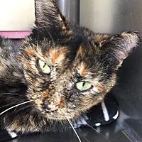 Adopt A Pet :: Deb - Jackson, MI