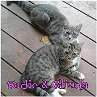 Adopt A Pet :: Sadie     171341 - Atlanta, GA