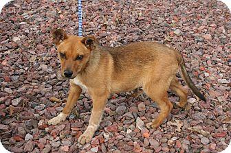 Labrador Retriever Mix Puppy for adoption in Goldens Bridge, New York - Bryce