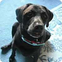 Adopt A Pet :: Boomer - Wilmington, DE