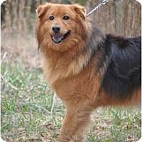 Adopt A Pet :: Mae Mae - York, SC