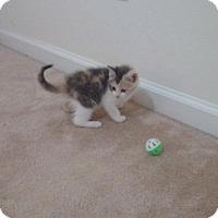 Adopt A Pet :: Turquoise - McDonough, GA