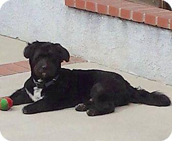 Terrier (Unknown Type, Medium) Dog for adoption in Portland, Oregon - Bishop