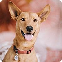 Adopt A Pet :: Nala - Portland, OR