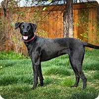 Adopt A Pet :: Lani- Courtesy Post - Boulder, CO
