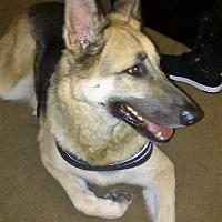 German Shepherd Dog Dog for adoption in San Diego, California - royal
