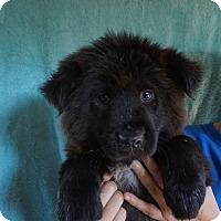 Adopt A Pet :: Cami - Oviedo, FL