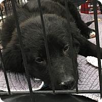 Adopt A Pet :: Ted - Tucson, AZ