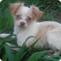 Adopt A Pet :: Cilia Orlando Chapter - Alpharetta, GA