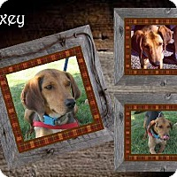 Adopt A Pet :: Foxey ADOPTED - Ontario, ON