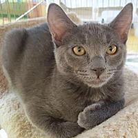 Adopt A Pet :: Slater - Encinitas, CA