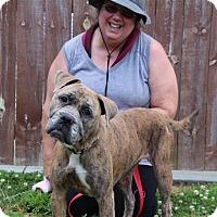 Adopt A Pet :: Izzy - Elyria, OH