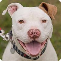 Adopt A Pet :: Hollywood - Dearborn, MI