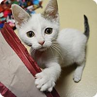 Adopt A Pet :: Bryan - Springfield, IL
