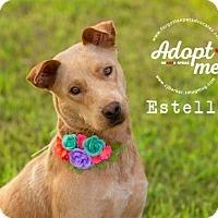 Adopt A Pet :: Estelle - Pearland, TX