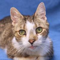 Adopt A Pet :: Conner 53 - Mentor, OH