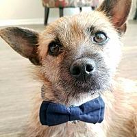 Adopt A Pet :: Skip - Marina del Rey, CA