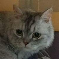 Adopt A Pet :: Hiberina - Ennis, TX