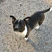 Adopt A Pet :: Birdie - Longview, TX