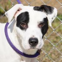 Adopt A Pet :: Nickel - Toccoa, GA