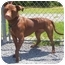 Photo 3 - American Staffordshire Terrier/American Pit Bull Terrier Mix Dog for adoption in Howes Cave, New York - Shyann