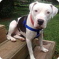 Adopt A Pet :: Frank (courtesy post) - WARREN, OH