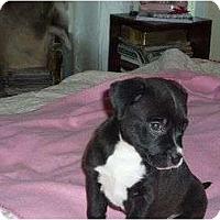 Adopt A Pet :: Star - Pointblank, TX