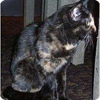Adopt A Pet :: Purrl - Farmington, AR
