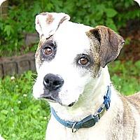 Adopt A Pet :: Diana - Mocksville, NC