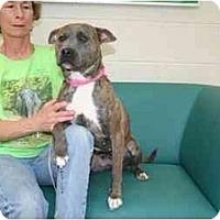 Adopt A Pet :: Loca - Chicago, IL
