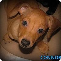 Adopt A Pet :: Conner - Silsbee, TX