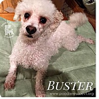 Adopt A Pet :: Buster - Essex Junction, VT
