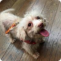Adopt A Pet :: Herbie - Antioch, IL