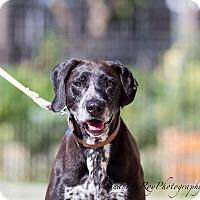 Adopt A Pet :: Roosevelt - Vacaville, CA