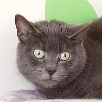 Adopt A Pet :: Grayson - Berlin, MD