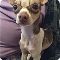 Adopt A Pet :: Raye - Barnegat, NJ