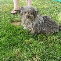 Adopt A Pet :: Clara - Lancaster, CA