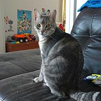 Adopt A Pet :: Oliver - Aylmer, ON