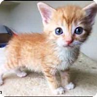 Adopt A Pet :: Gabriella - Aurora, CO