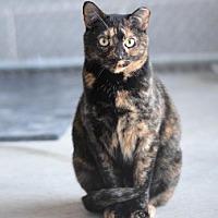 Adopt A Pet :: Raven - Philadelphia, PA