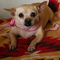 Adopt A Pet :: Al Pacino - Yucaipa, CA