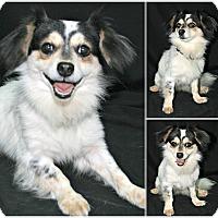 Adopt A Pet :: Melvin - Woonsocket, RI