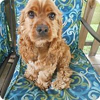 Adopt A Pet :: Brownie&Buddy-Adopted! - Kannapolis, NC