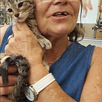 Adopt A Pet :: Cattie - Palm Springs, CA