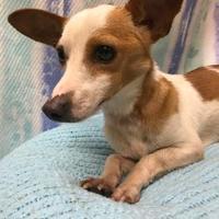 Adopt A Pet :: Tip - Greensboro, NC