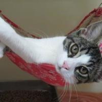 Adopt A Pet :: Jemma - Menomonie, WI