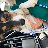 Adopt A Pet :: Bandit - Savannah, GA
