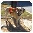 Photo 2 - Labrador Retriever Mix Dog for adoption in Cumming, Georgia - Butterscotch
