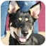 Photo 1 - German Shepherd Dog/Rottweiler Mix Dog for adoption in Berkeley, California - Hans
